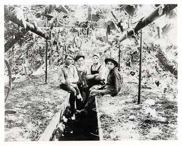 Inside the Hermes family greenhouse at 9801 Gross Point Road, about 1907.  Left to right:  Nick Hermes, Paul Hermes, John Goedert; the youngster on the right is unidentified